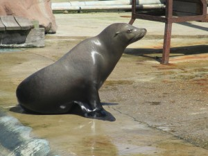 sea lion chessington